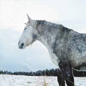 トーカ マヒロ写真展「FROZEN LIGHT」開催のお知らせ